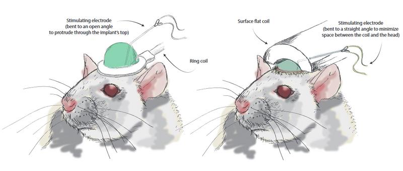 rat-implant-two-coils